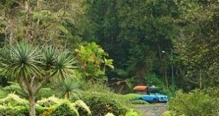 Cagar-Alam-Pulau-Maya-Karimata