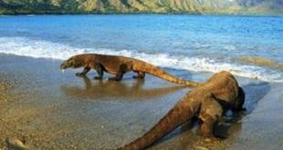Pulau-Komodo,.